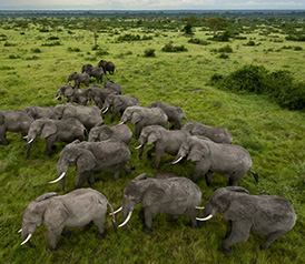 Uganda - Queen Elizabeth Nationalpark